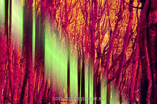 forest-colorexplosion